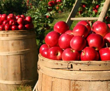 Ultimate guide frankfurt apple wine