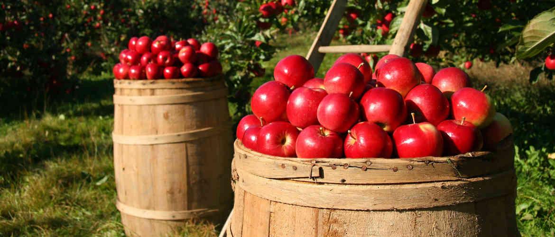Frankfurt Apple Wine – The Ultimate Guide